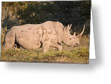 Female White Rhinoceros Greeting Card by Science Photo Library