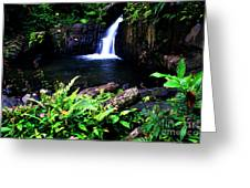 Ferns Flowers And Waterfall Greeting Card by Thomas R Fletcher