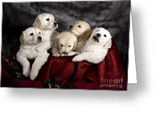 Festive Puppies Greeting Card by Angel  Tarantella
