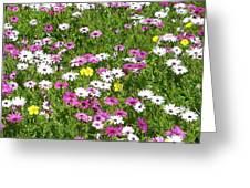 Field of Flowers Greeting Card by Deborah  Montana
