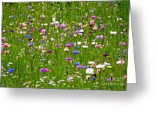 Field Of Flowers Greeting Card by Leyla Ismet