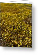 Field Of Goldfields In Park Sierra-ca Greeting Card by Ruth Hager