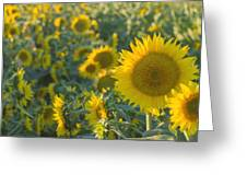 Field Of Happiness Greeting Card by Rima Biswas