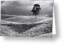 Field Of Saddle Road Dreams Greeting Card by Ellen Cotton