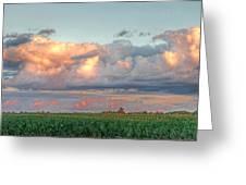 Fields Of Corn Greeting Card by Heather Allen