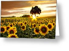 Fields Of Gold Greeting Card by Debra and Dave Vanderlaan
