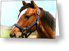 Filly Greeting Card by Paul Tagliamonte