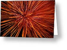 Fire In The Sky Greeting Card by Carolyn Marshall