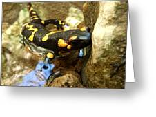 Fire Salamander  Greeting Card by Lucy D