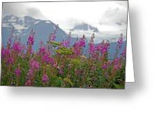 Fireweed Greeting Card by Jim Cook