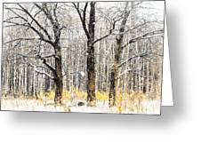First Snow. Tree Brothers Greeting Card by Jenny Rainbow