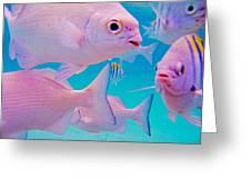 Fish Frenzy Greeting Card by Carey Chen