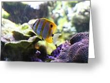 Fish - National Aquarium In Baltimore Md - 1212111 Greeting Card by DC Photographer
