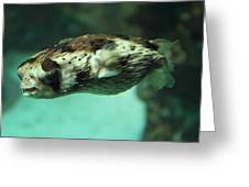 Fish - National Aquarium In Baltimore Md - 1212136 Greeting Card by DC Photographer