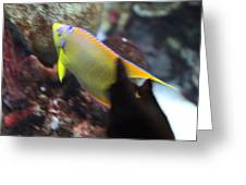 Fish - National Aquarium In Baltimore Md - 121272 Greeting Card by DC Photographer