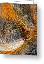 Fish On The Net Greeting Card by Stylianos Kleanthous