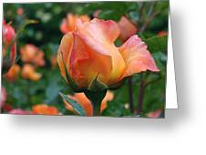 Fit For A Queen Greeting Card by Rona Black