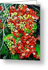 Flamboyant In Bloom Greeting Card by Karin  Dawn Kelshall- Best