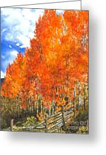 Flaming Aspens Greeting Card by Barbara Jewell