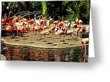 Flamingo Family Reunion Greeting Card by KAREN WILES