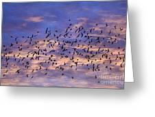Flight Of The Blackbirds Greeting Card by Darren Fisher