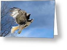 Flight Of The Red Tail Greeting Card by Bill Wakeley