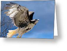Flight Of The Red Tail Square Greeting Card by Bill  Wakeley