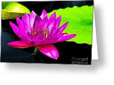 Floating Purple Water Lily Greeting Card by Nick Zelinsky