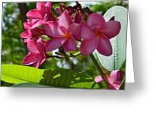 Flora Key West Greeting Card by Monika Maksimowicz
