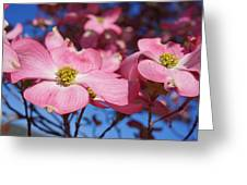 Floral Art Print Pink Dogwood Tree Flowers Greeting Card by Baslee Troutman Fine Photography Art