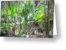 Florida Palmetto Bush Greeting Card by Carol Groenen