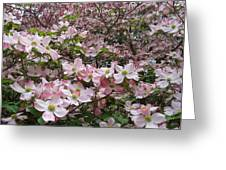 Flourishing Pink Magnolias Greeting Card by Deborah  Montana