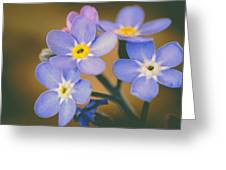 Forget Me Nots Greeting Card by Marco Oliveira