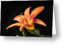 Flower Greeting Card by Jelena Jovanovic