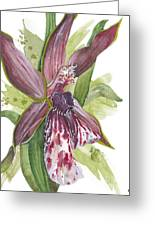 Flower Orchid 10 Elena Yakubovich Greeting Card by Elena Yakubovich