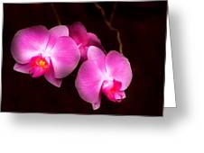 Flower - Orchid - Better In A Set Greeting Card by Mike Savad