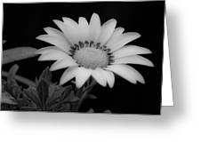 Flower Greeting Card by Ron White