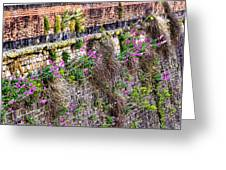 Flower Wall Along The Arno River- Florence Italy Greeting Card by Jon Berghoff