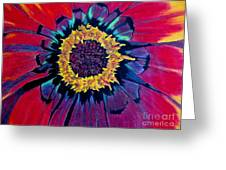 Flowerburst Greeting Card by Rory Sagner