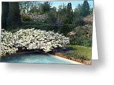 Flowers And Pool Greeting Card by Terry Reynoldson