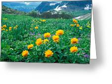 Flowers Greeting Card by Anonymous