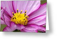 Flowers For The Wall Greeting Card by Eunice Miller