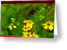 Flowers In Red Fence Greeting Card by Darryl Dalton