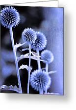 Flowers In The Metal Greeting Card by Toppart Sweden