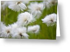 Flowery Cotton Greeting Card by Heiko Koehrer-Wagner