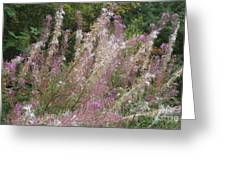 Fluffy Flowers Greeting Card by John Williams