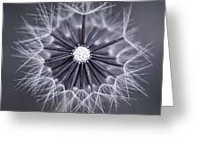 Fluffy Sun - S99b Greeting Card by Variance Collections