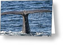 Flukes Of A Sperm Whale 2 Greeting Card by Heiko Koehrer-Wagner