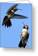 Fluttering Greeting Card by Shane Bechler