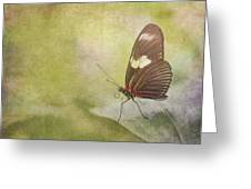 Fly Away Greeting Card by David and Carol Kelly